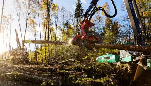 Skogsmaskinerna skotare och skördare i arbete med att kapa och lasta timmer.