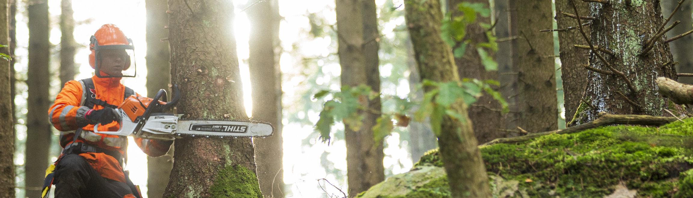 En person med motorsåg i en granskog.