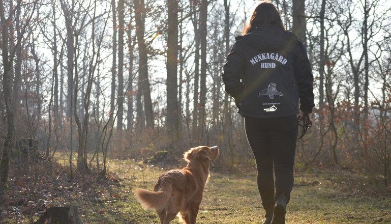 En person med hund går i skogen.