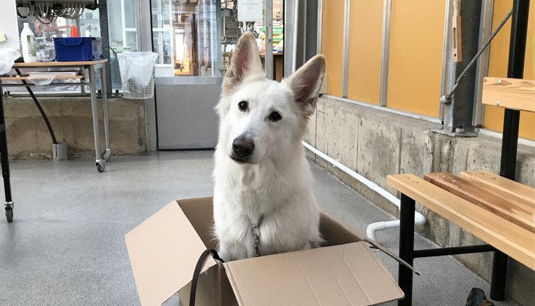 Hund som sitter i en kartong.