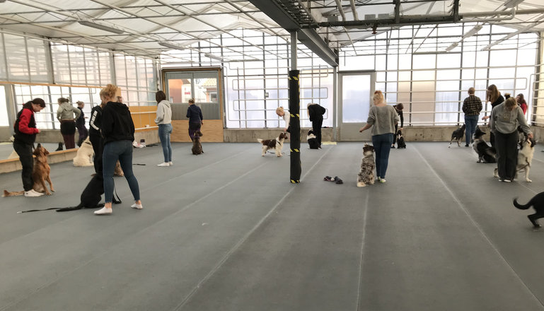 Flera personer med hundar i en träningshall.