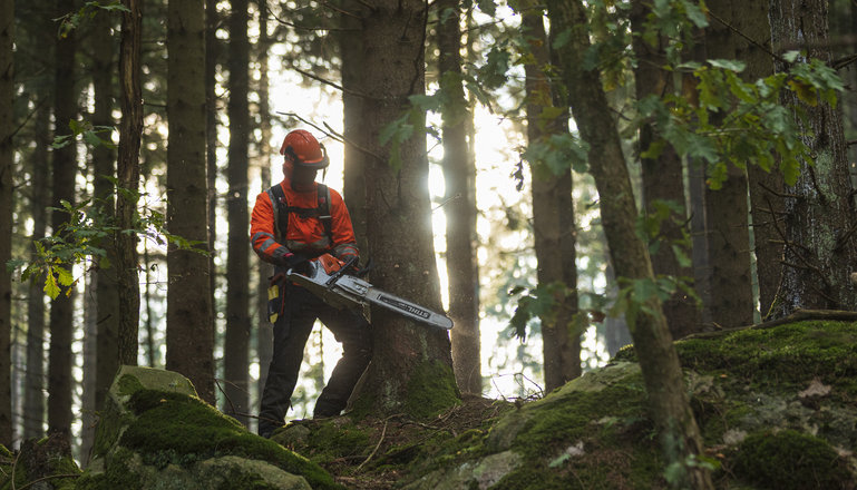 En person med motorsåg arbetar i skogen.