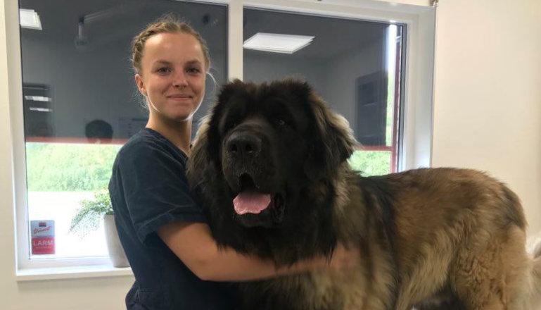 En kvinnlig djursjukvårdare kramar en stor hund på en djurklinik.